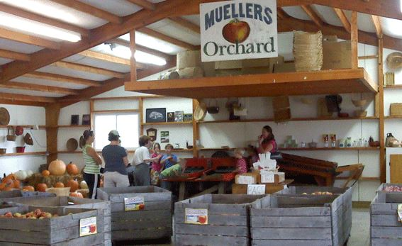 Muellers Orchard Fenton